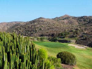 Spain – 'Birdies in the Canaries'