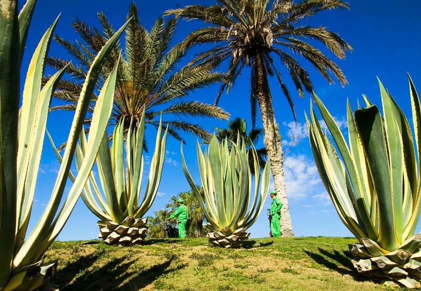 Kingdom of Golf - Morocco by Food golf travel