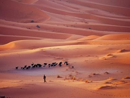 Morocco – 'Marrakech to the Sahara'